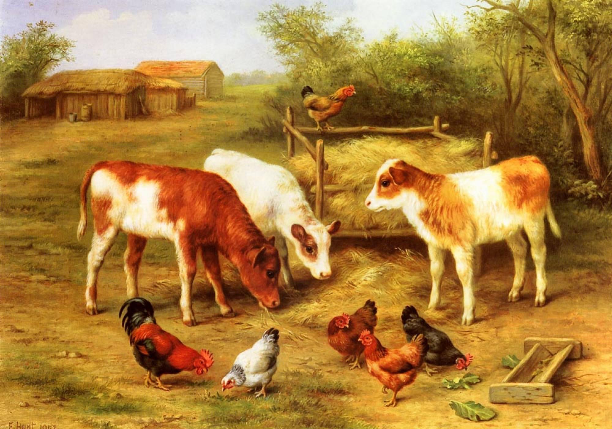 Кормление месячного теленка полезная информация