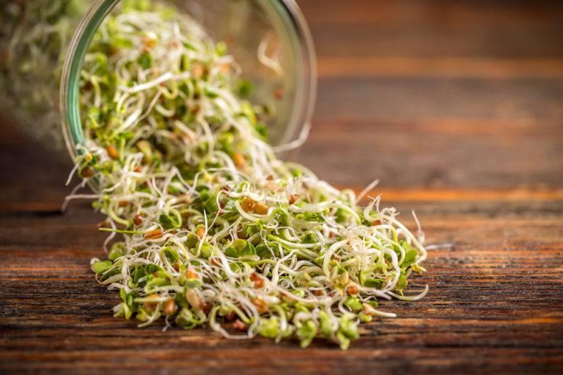 Как в домашних условиях прорастить чечевицу и что можно приготовить из этого натурального продукта? как проращивать чечевицу в домашних условиях как правильно прорастить чечевицу.