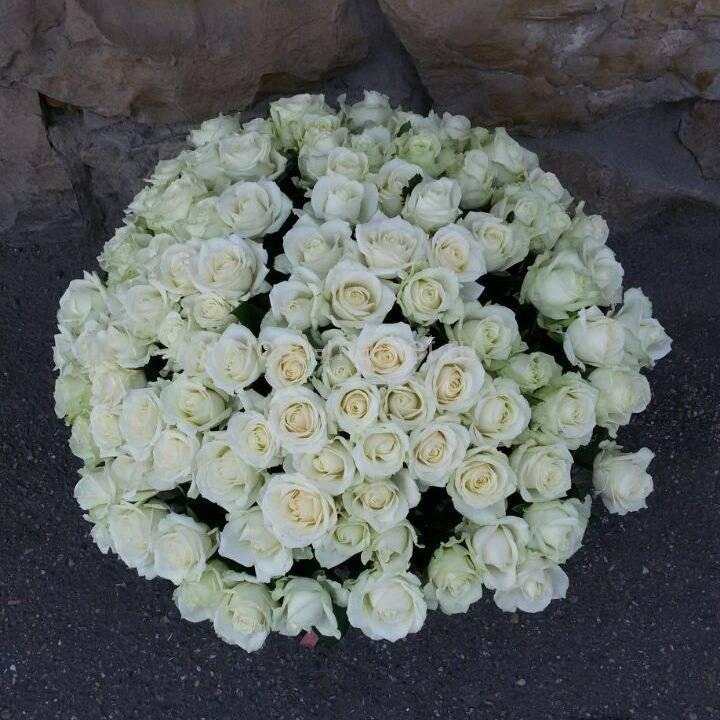 Сорт розы флорибунда новалис из коллекции «сказочные розы»: выращивание и уход
