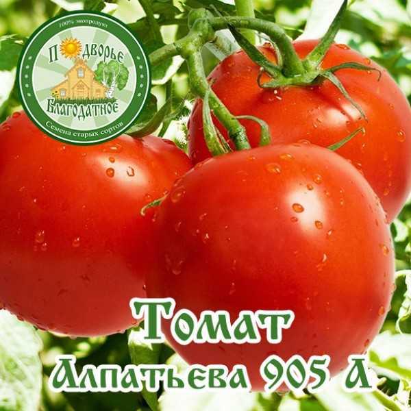 Томат алпатьева
