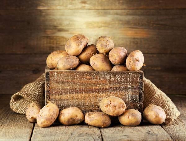 Хранение картофеля: условия и способы, технология закладки