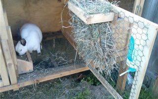 Кормушка для кроликов своими руками. удобно просто и дешево