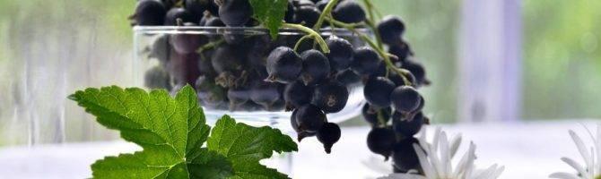 Чем весной подкормить смородину, малину и крыжовник? секреты хорошего урожая!