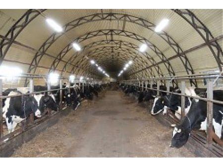 Ферма для крупнорогатого скота: выбор места, правила обустройства коровника, этапы строительства
