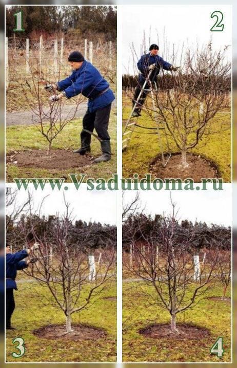 Правила ухода за яблонями весной и летом