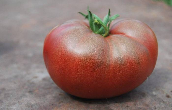 Томат нина: описание сорта, отзывы, фото, урожайность   tomatland.ru