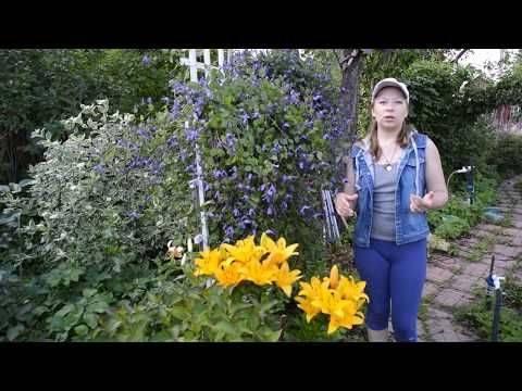 Об уходе за розами в июле и августе: подкормка и обрезка в летнее время года