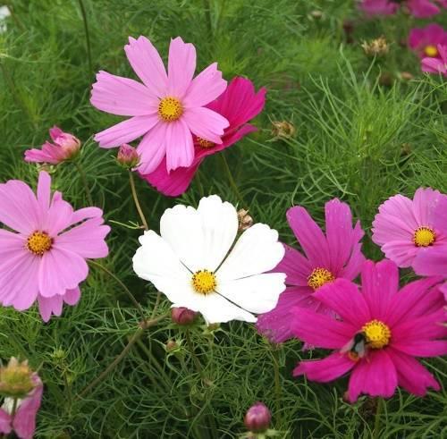 Какие цветы нельзя держать дома и почему? топ-25 опасных для здоровья растений +приметы   ( 25+ фото & видео )
