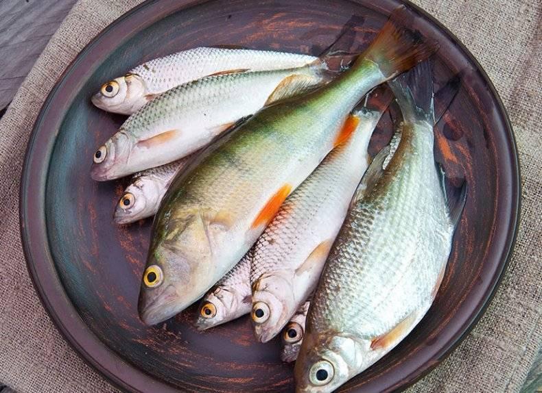 Сырая, соленая рыба для кур несушек и цыплят, можно ли кормить рыбой с костями