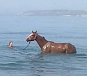 Как лошадью управляют: правильно держаться на коне во время езды