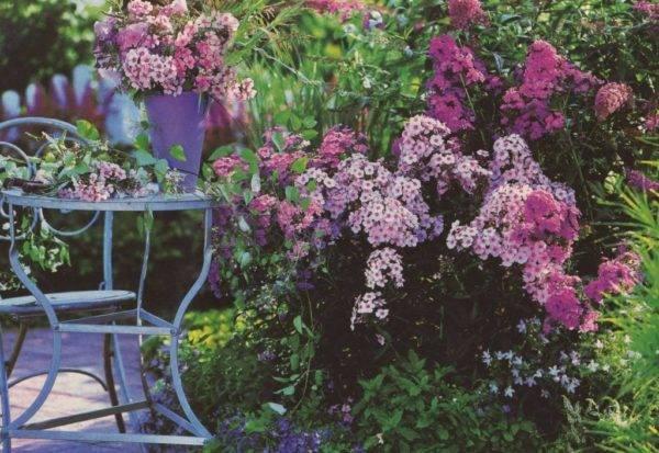 Флоксы однолетние: посадка и необходимый уход – пошаговая инструкция для начинающих садоводов