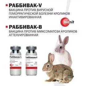 Прививки (вакцинация) кроликов
