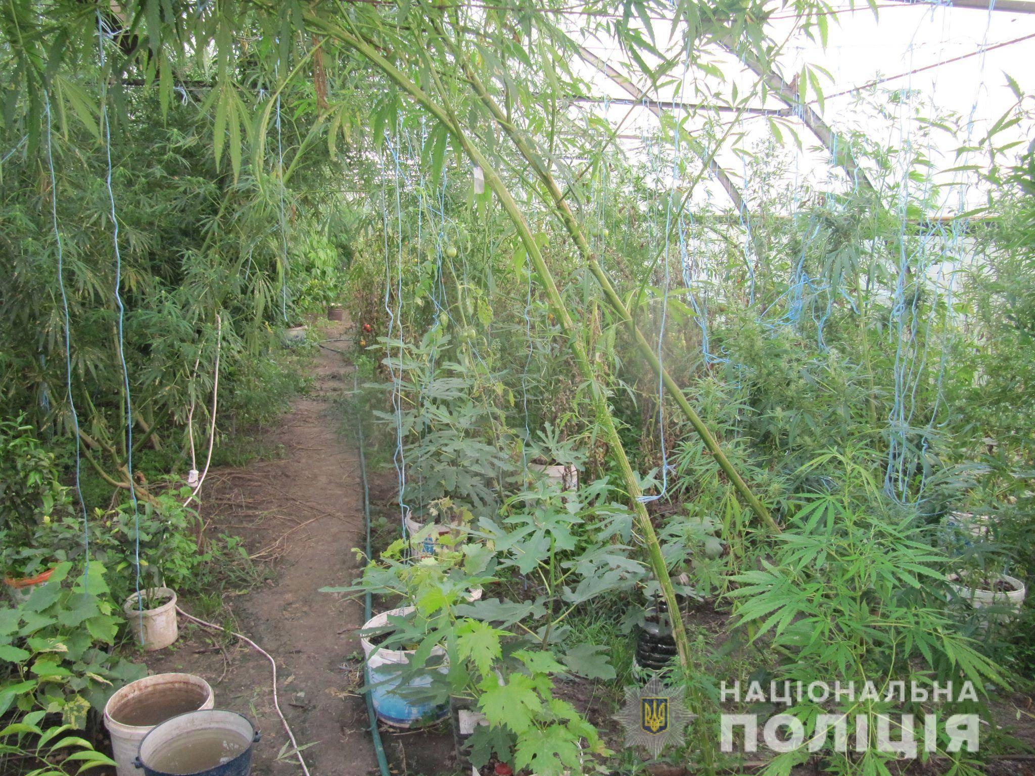 Соседство культур в теплице: что можно сажать вместе с помидорами?
