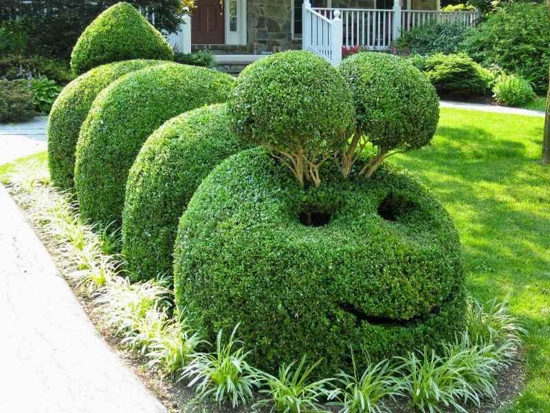 Какие кустарники нельзя обрезать весной