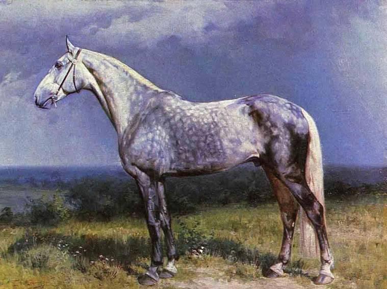 О русских породах лошадей: забайкальская, алтайская, русская верховая