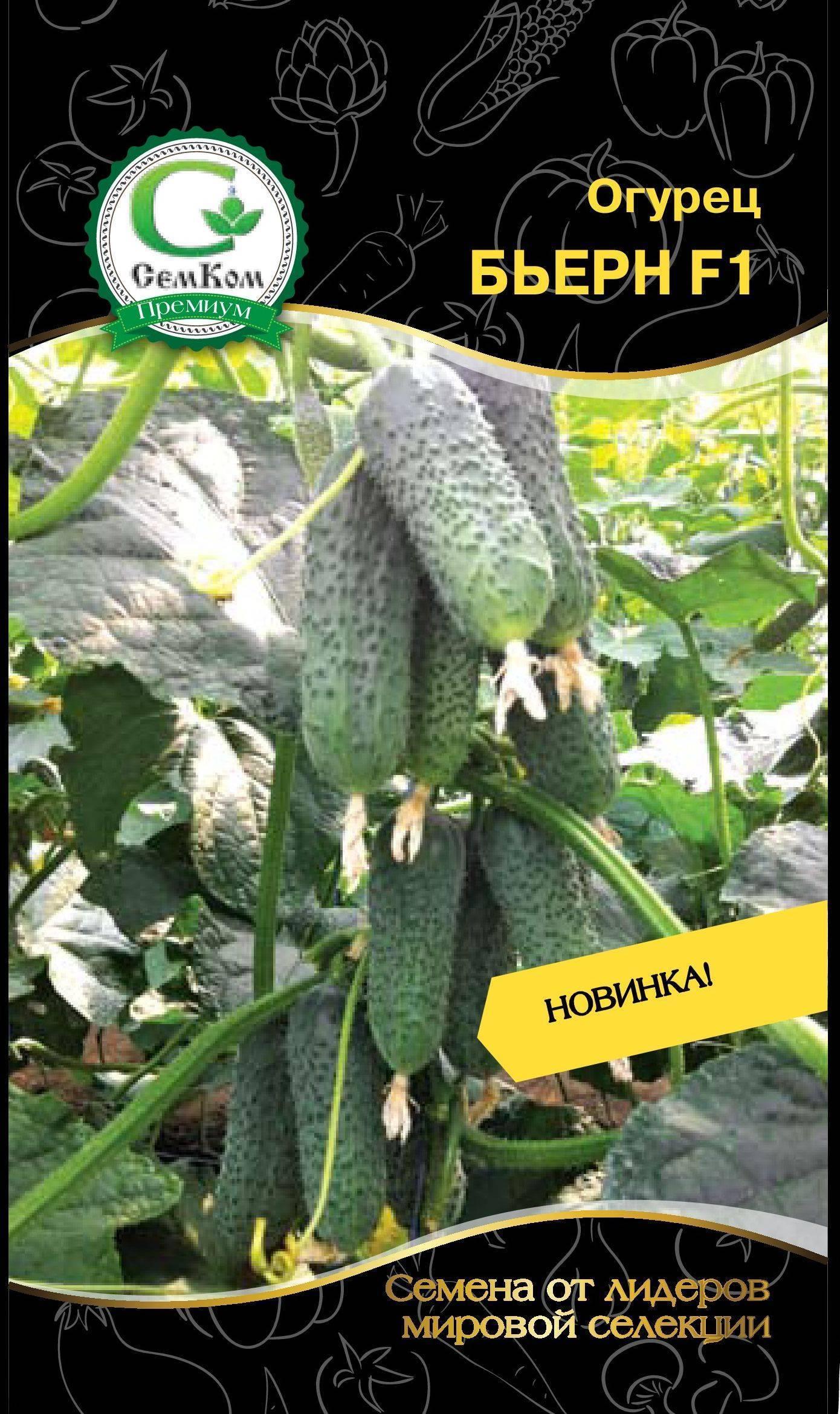 Голландский гибрид огурцов «бьерн f1»: фото, видео, описание, посадка, характеристика, урожайность, отзывы