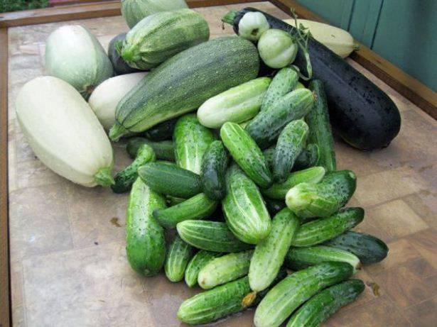После чего (каких овощных культур) можно сажать лук весной и под зиму: лучшие предшественники