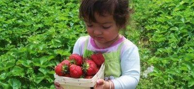Как и чем обработать клубнику весной от болезней и вредителей