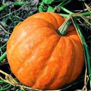 Описание популярных сортов кустовой тыквы, их выращивание и урожайность