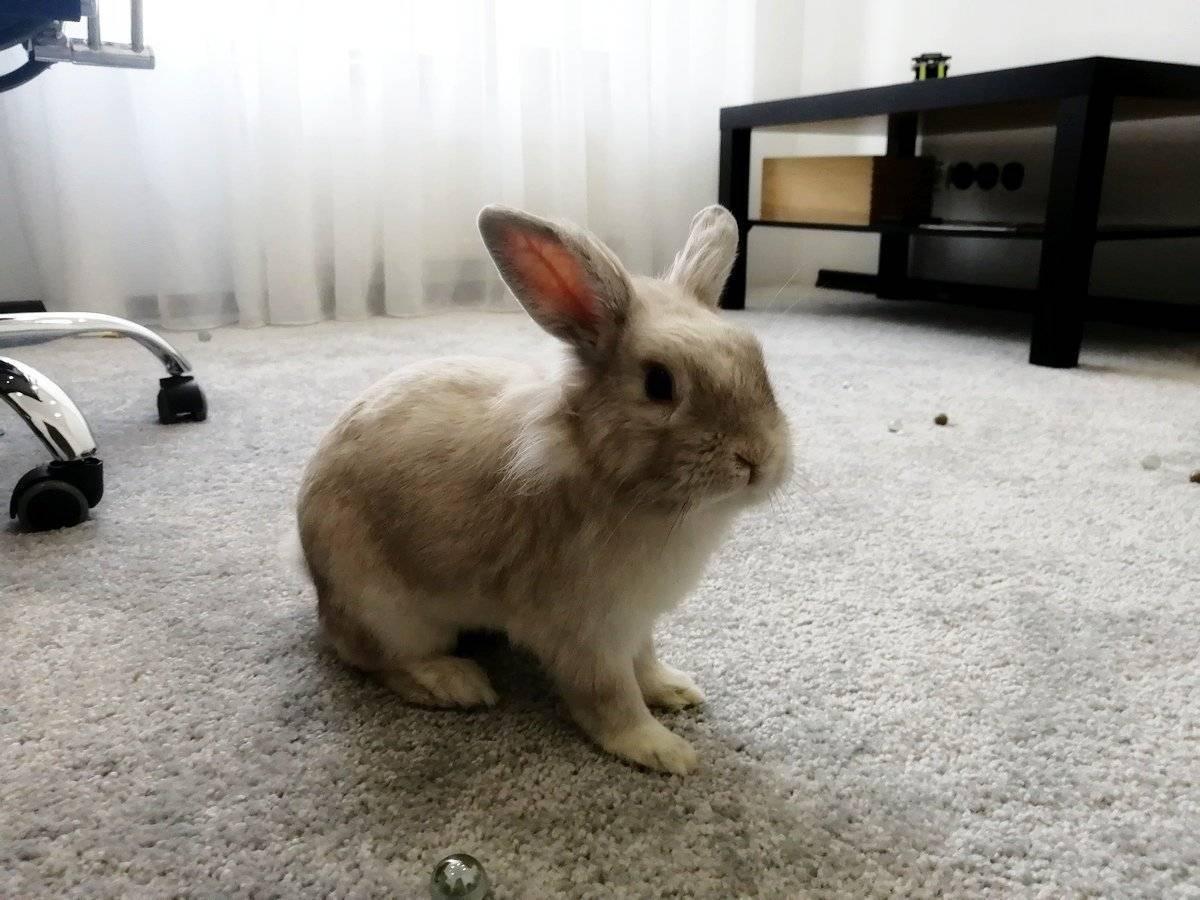 Как дрессировать кролика?