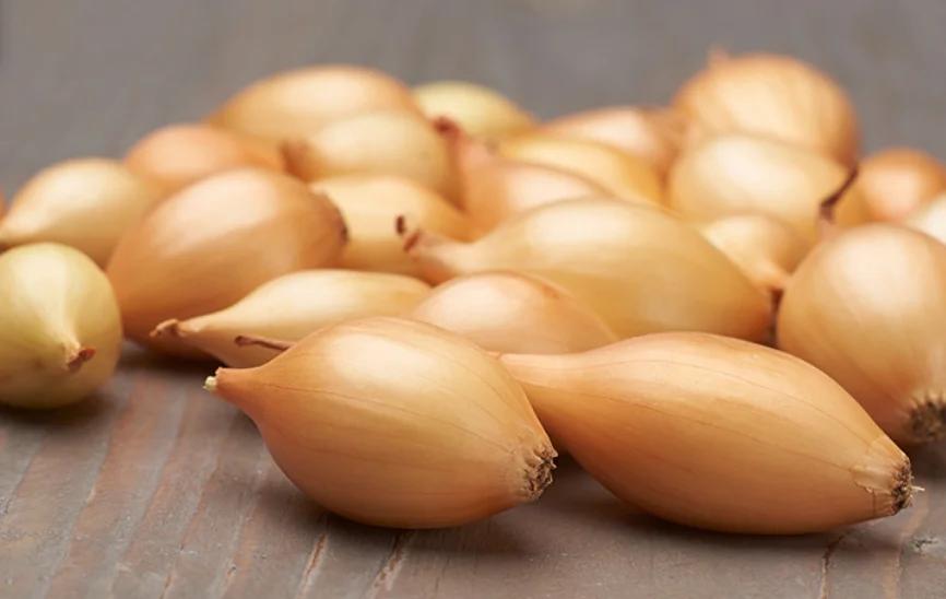 Когда сажать лук весной в открытый грунт: как сажать севок — правильные способы, выбор и подготовка лука севка для посадки, оптимальные майские сроки