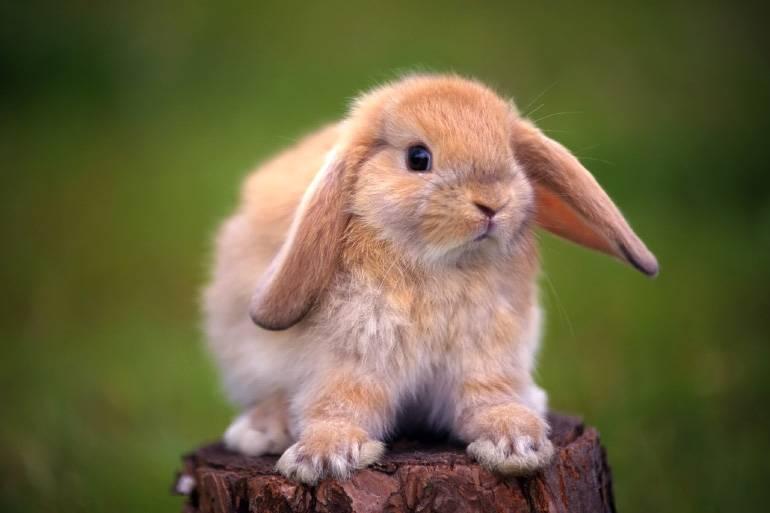 Болезни кроликов симптомы и их лечение вздутие
