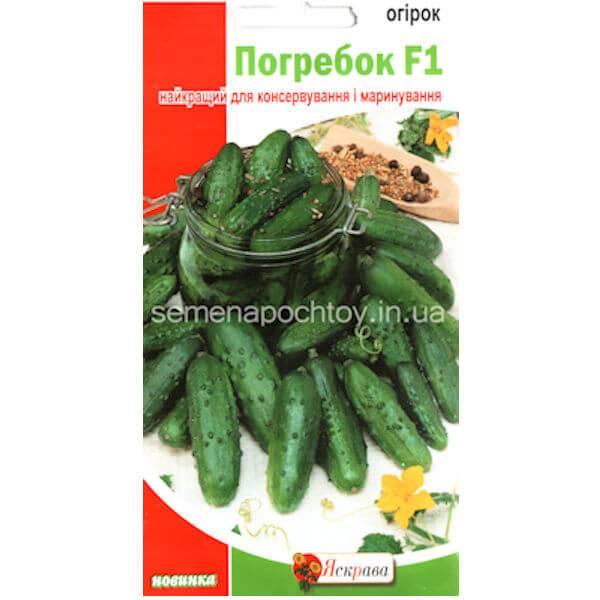 Огурцы: описание, сорта для открытого грунта и теплиц, подготовка семян, выращивание рассады, посадка, уход, защита от болезней, вредителей