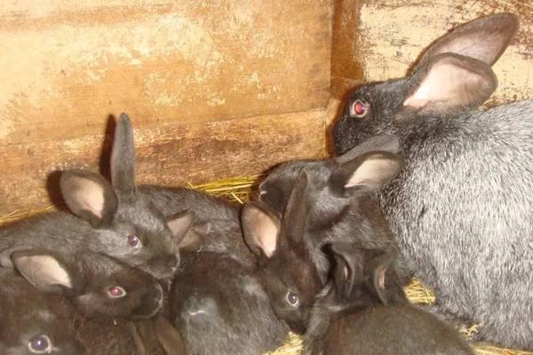 Массовый падеж кроликов причины