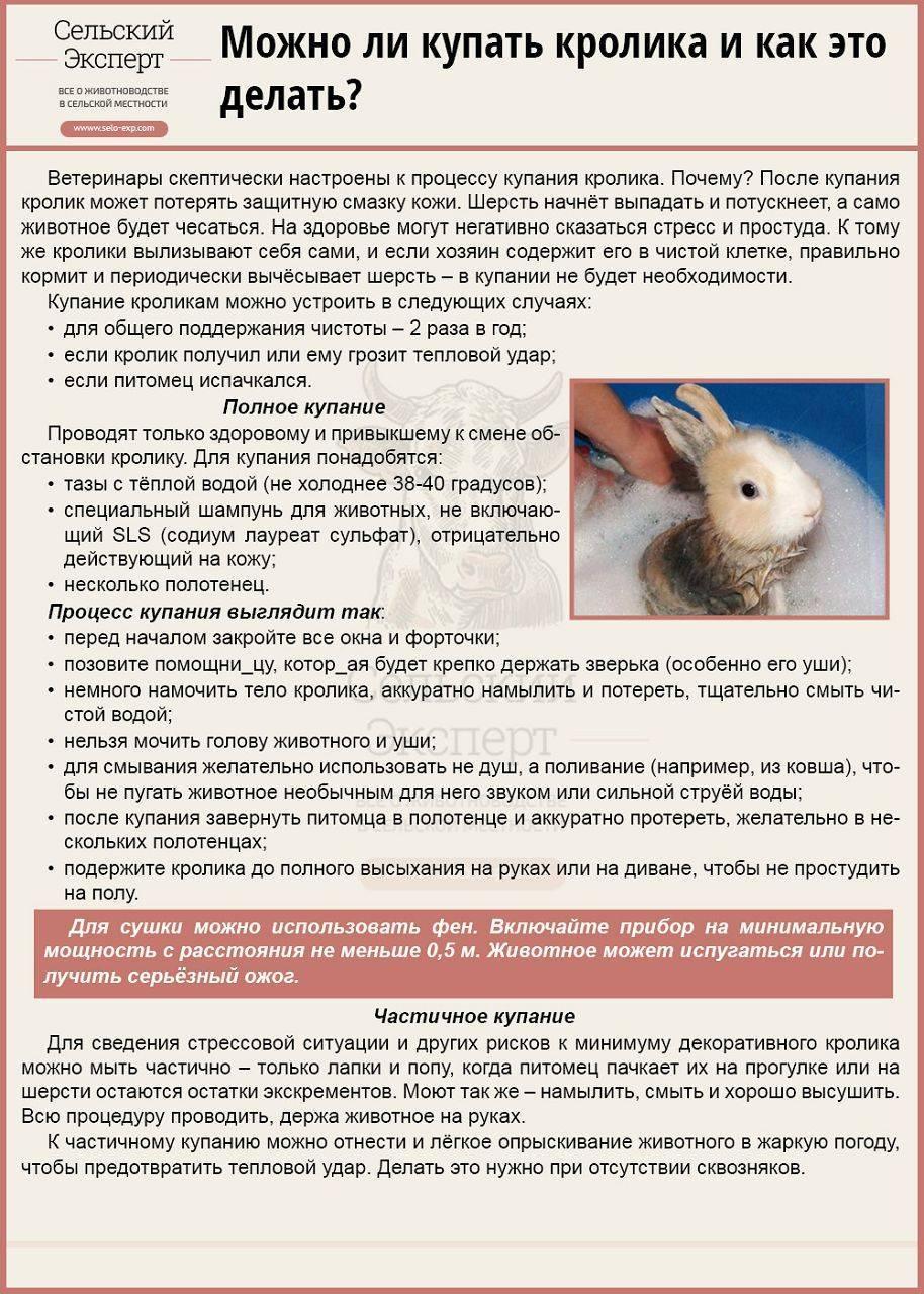 Можно ли купать кролика: особенности проведения водных процедур