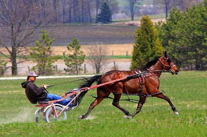 Список пород лошадей — википедия переиздание // wiki 2
