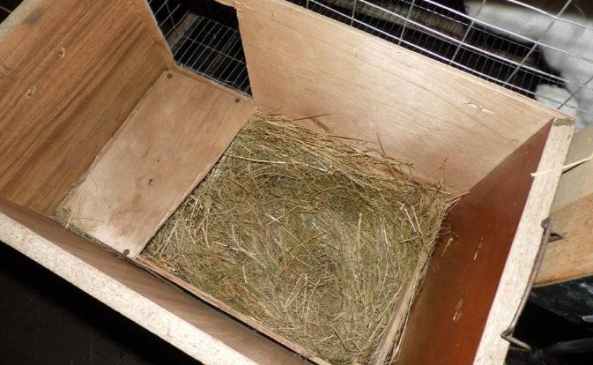 Изготовление маточника для кроликов своими руками: чертежи и рекомендации