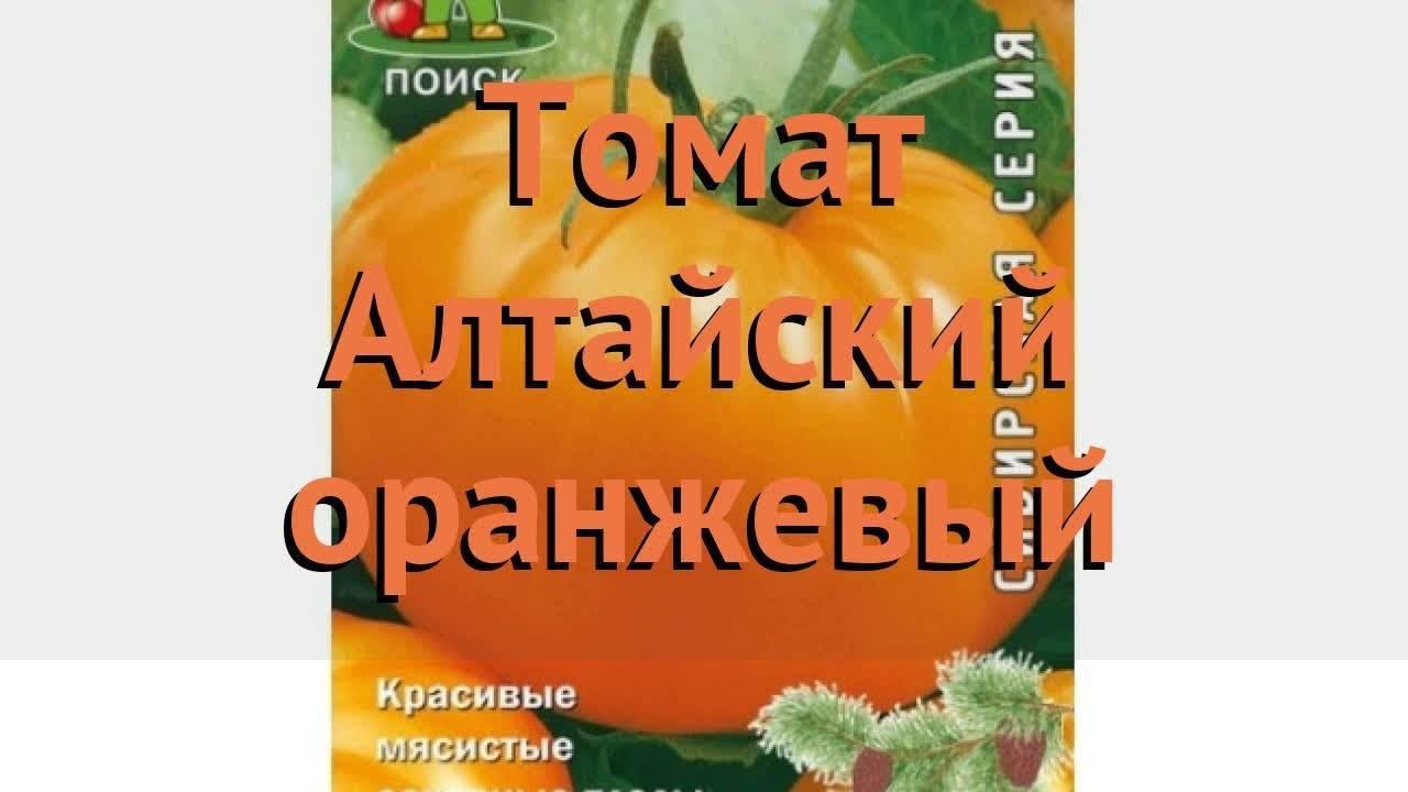 Томат бизон оранжевый: отзывы, фото, урожайность, описание и характеристика   tomatland.ru
