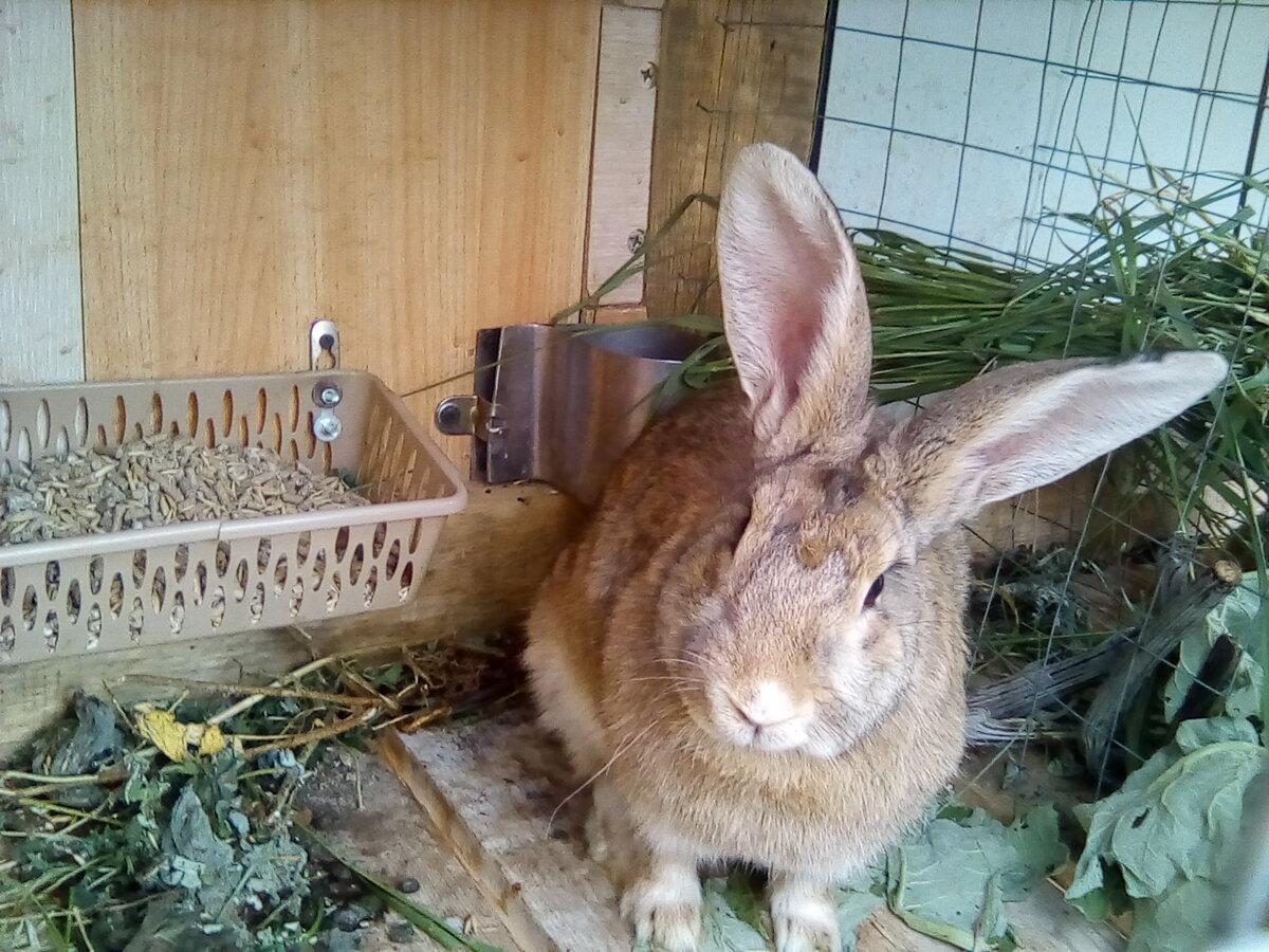 Как выглядят новорожденные кролики и как за ними ухаживать?
