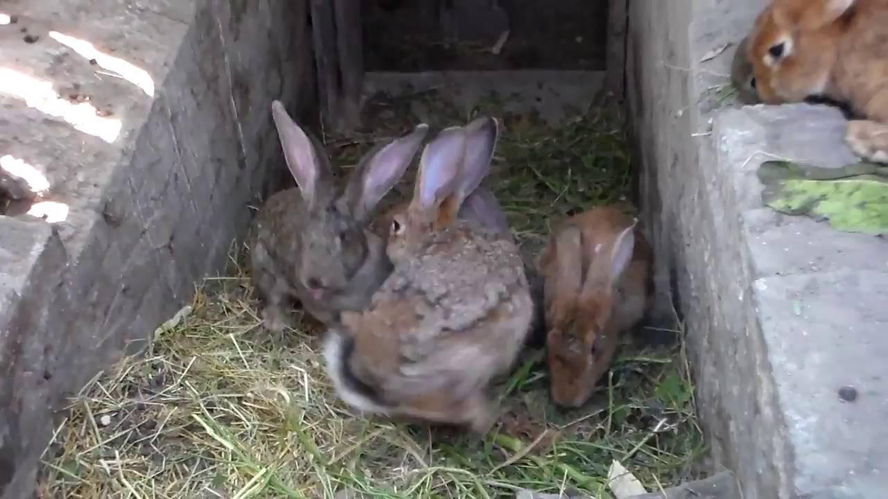 Что делать, если кролик получил тепловой удар? - общая информация - 2020