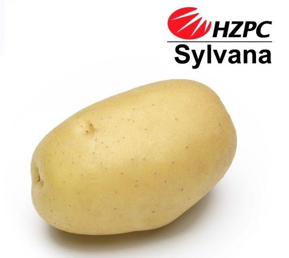 Сорт картофеля василёк: описание и характеристика