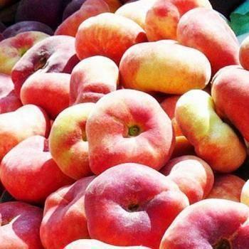 Инжирный персик или персик плоский   образцовая усадьба