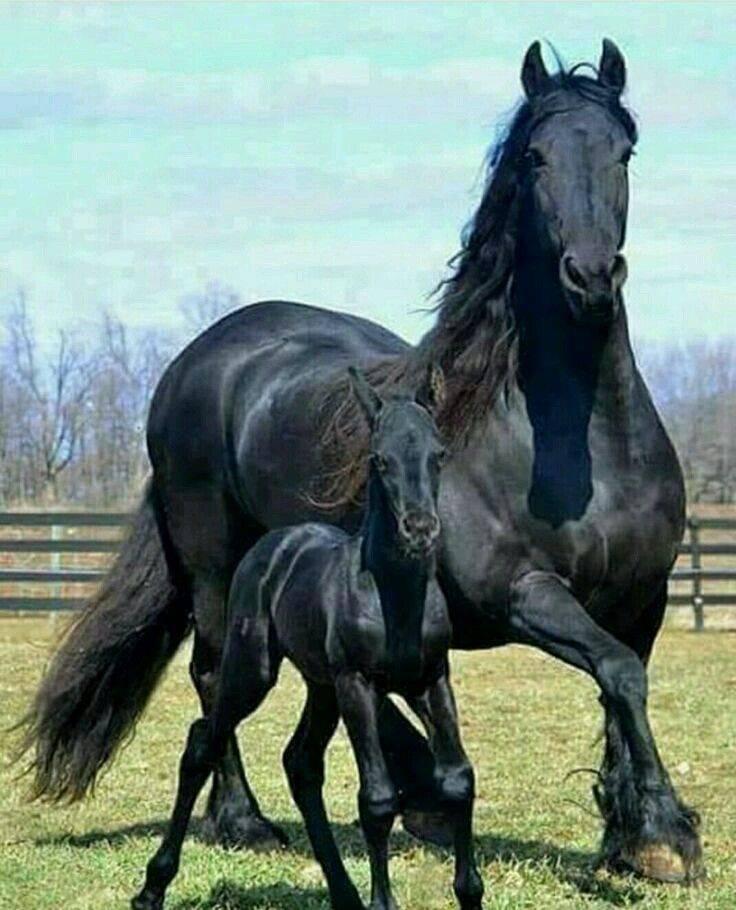 Воронной конь