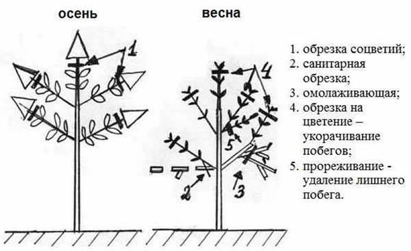 Гортензия осенью — как обрезать и укрыть садовую гортензию на зиму