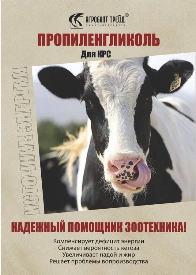 Кетоз коров и крс: симптомы и лечение ацетонемии 2020