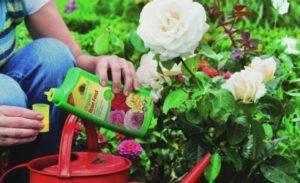 Чем подкормить садовые цветы осенью, чтобы весной они пышно зацвели