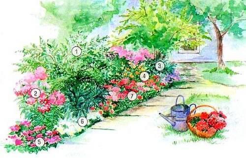 Схемы готовых клумб с пионами. как создать клумбу с пионами, с чем посадить эти цветы? несколько примерных схем посадки пионов