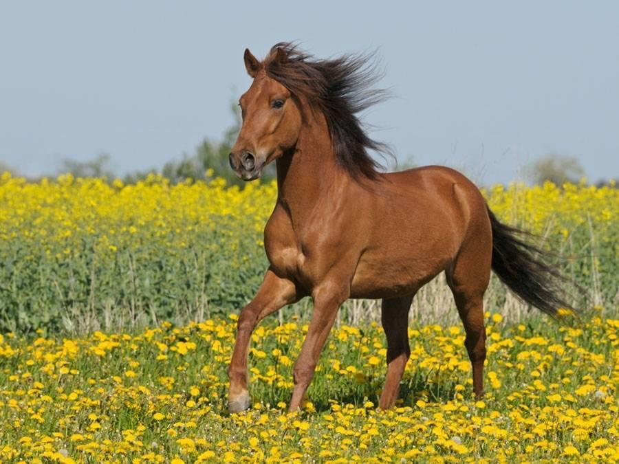 Что едят лошади и чем их кормить — обзор кормов и правильный рацион