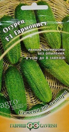 Огурец изящный: описание сорта, агротехника, посадка и уход, плюсы и минусы