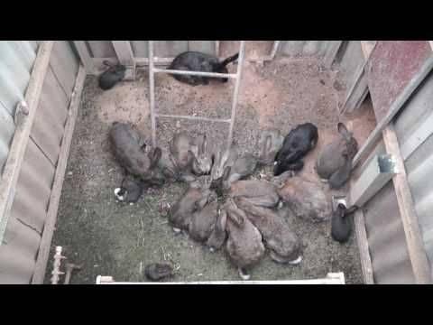 Преимущества и недостатки содержания кроликов в ямах
