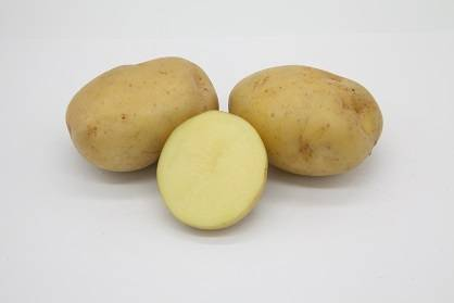 Картошка ривьера: описание сорта, характеристика, отзывы