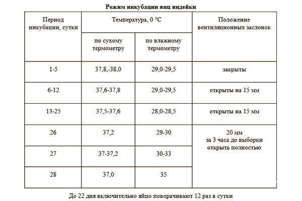 Инкубация индюшиных яиц в домашних условиях: таблица, температура, овоскопирование