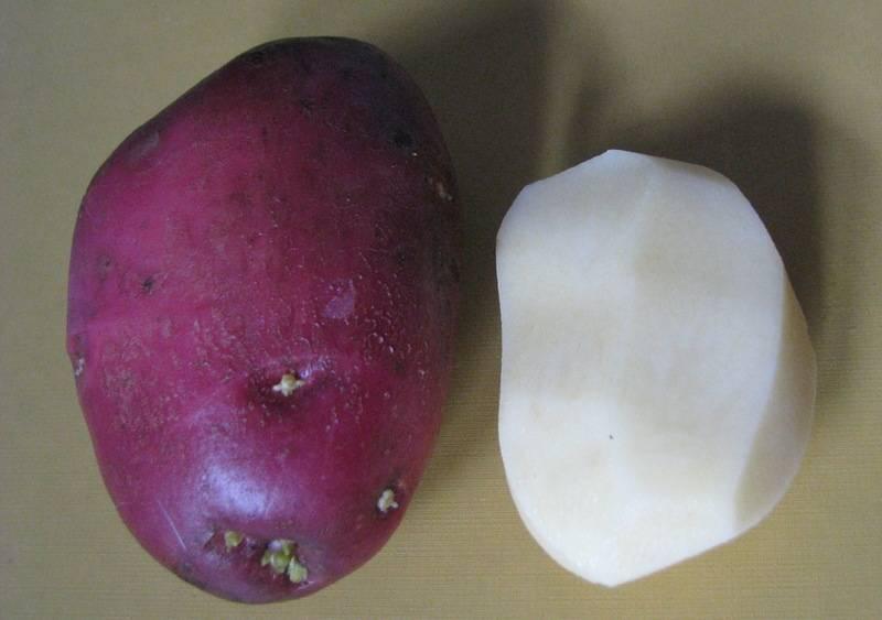 """Картофель """"луговской"""": описание сорта, фото, рекомендации по выращиванию"""