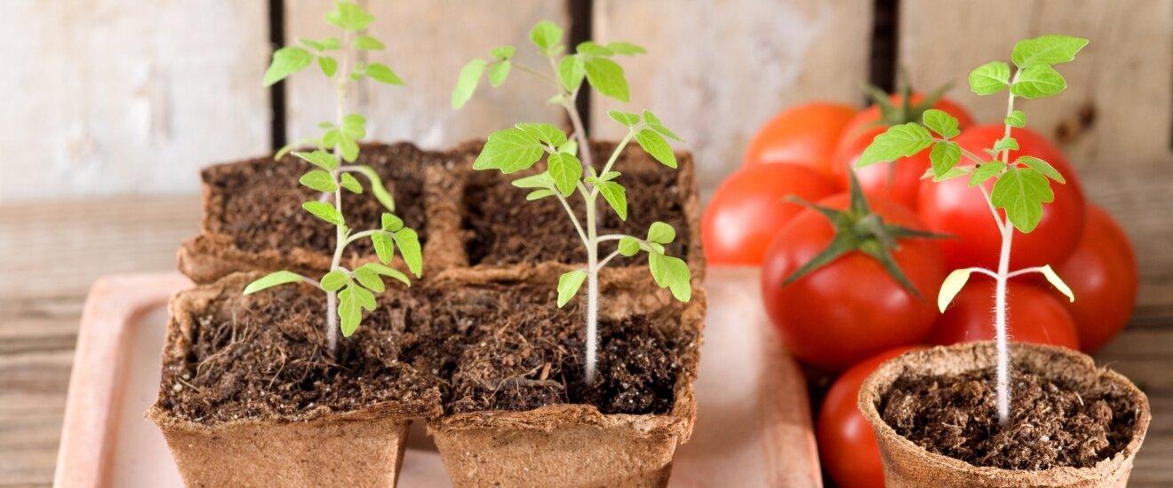 Обработка помидор от болезней народными средствами