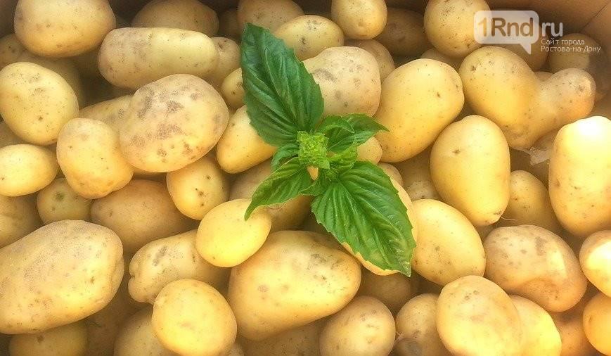 Сорт картофеля «фермер»: характеристика, описание, урожайность, отзывы и фото
