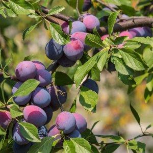 Весенняя пересадка многолетних цветов – когда и как правильно